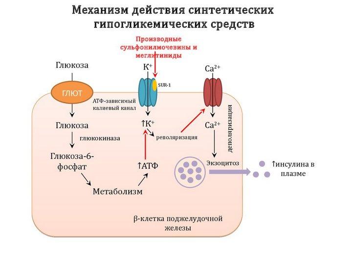dejstvie-metformina