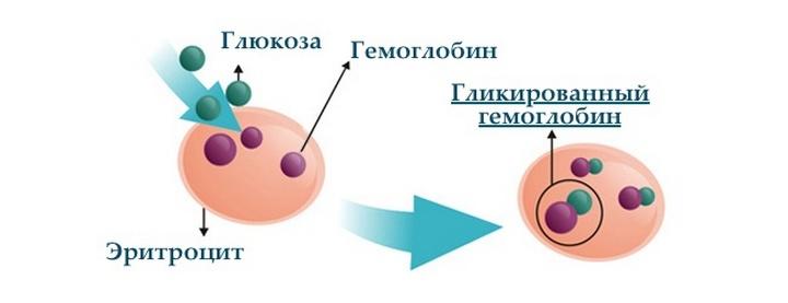 гликированный гемоглобин в крови