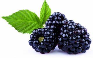 Рецепты из ежевики при сахарном диабете
