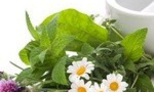 Лечебные травы при сахарном диабете