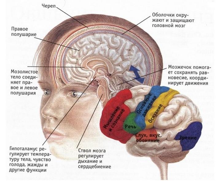 гипергликемия при диабете егативно влияет на память