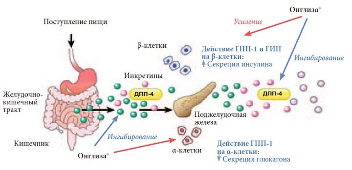 ингибиторы-дпп-4