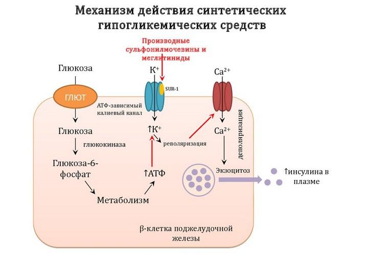 меглитиниды