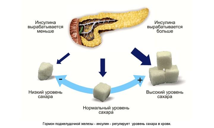 Выработка гормона инсулина поджелудочной железой