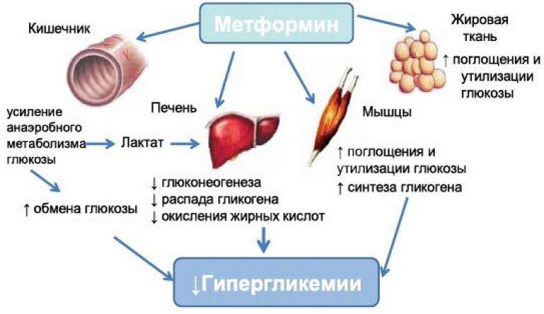 Действие препарата