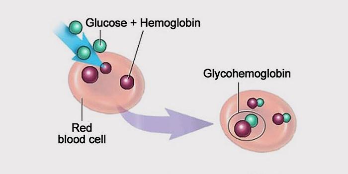 Что показывает анализ на гликированный гемоглобин — расшифровка. Как сдавать кровь на гликированный гемоглобин?