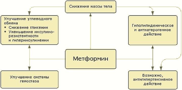 действие-метформина