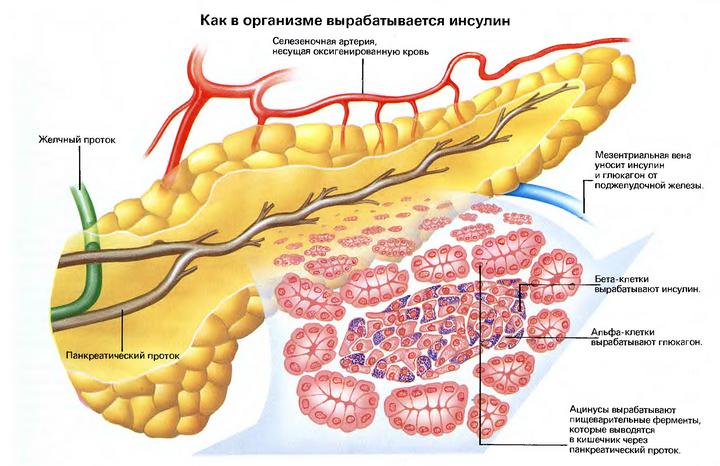 как в организме вырабатывается инсулин