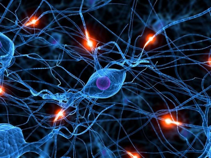 нервные-клетки