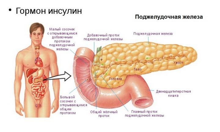 воздействие инсулина на щитовидку